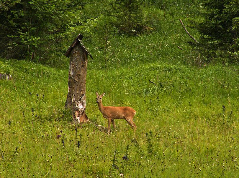 V doline Čierneho Váhu má človek skutočne ku divej prírode veľmi blízko.